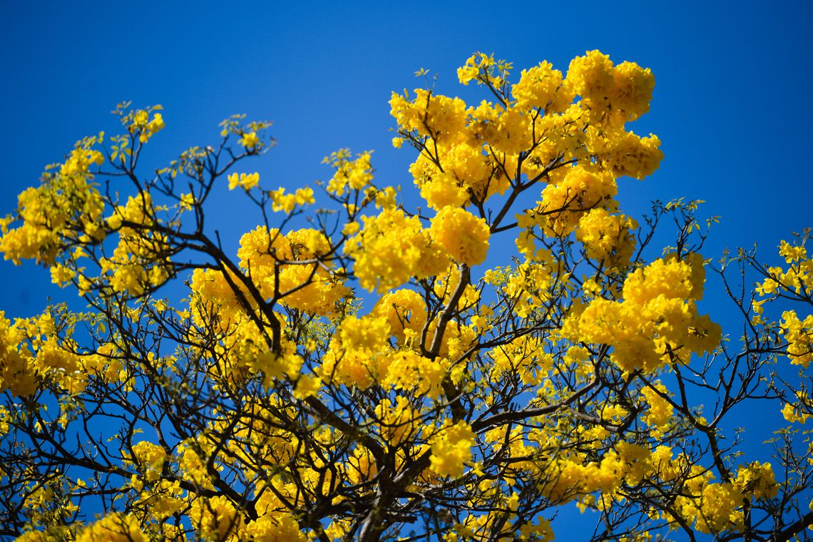 Primavera, a estação que floresce