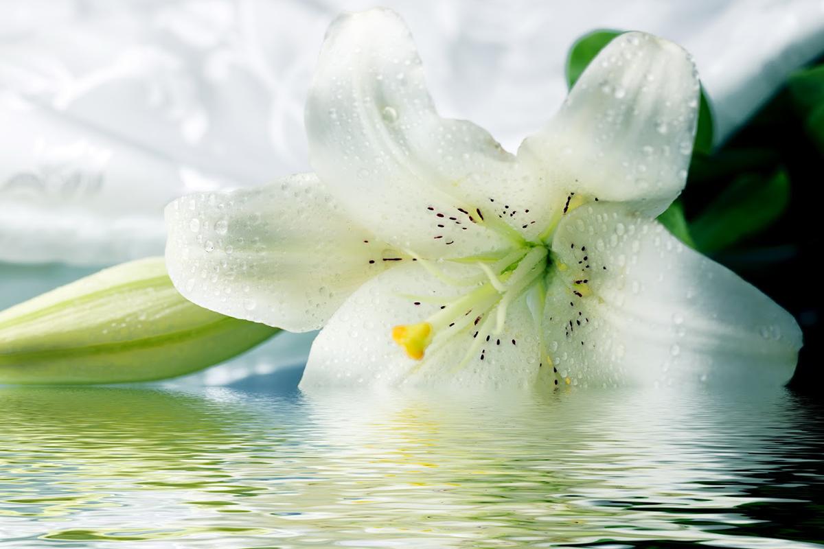 Castidade - Primavera/Verão